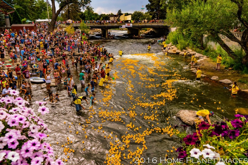 Rubber ducks floating down the Truckee River