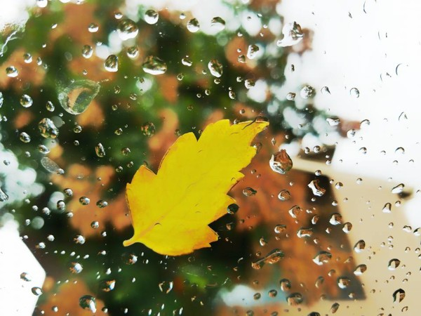 A fall-colored leaf stuck to a window