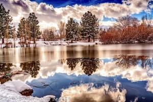Paradise Ponds