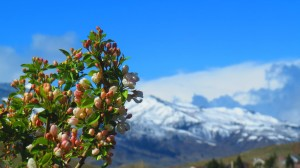 budding branch with mountains