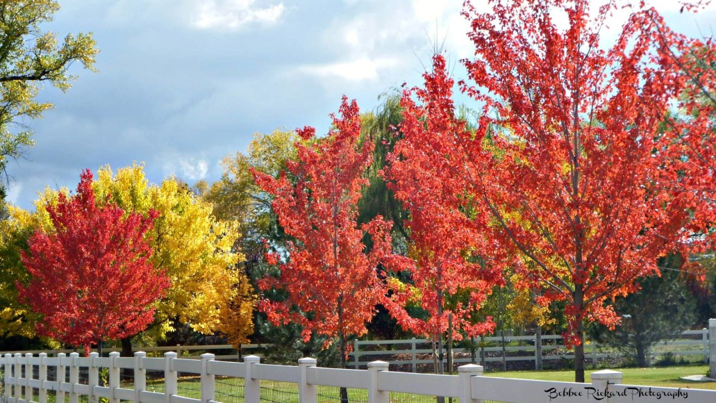 Trees showing fall colors in South Reno