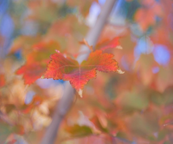 Close up of leaf showing fall color