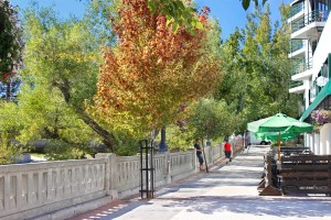 Trees showing fall colors along riverwalk path