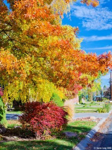Trees and bushes in a neighborhood showing fall colors.