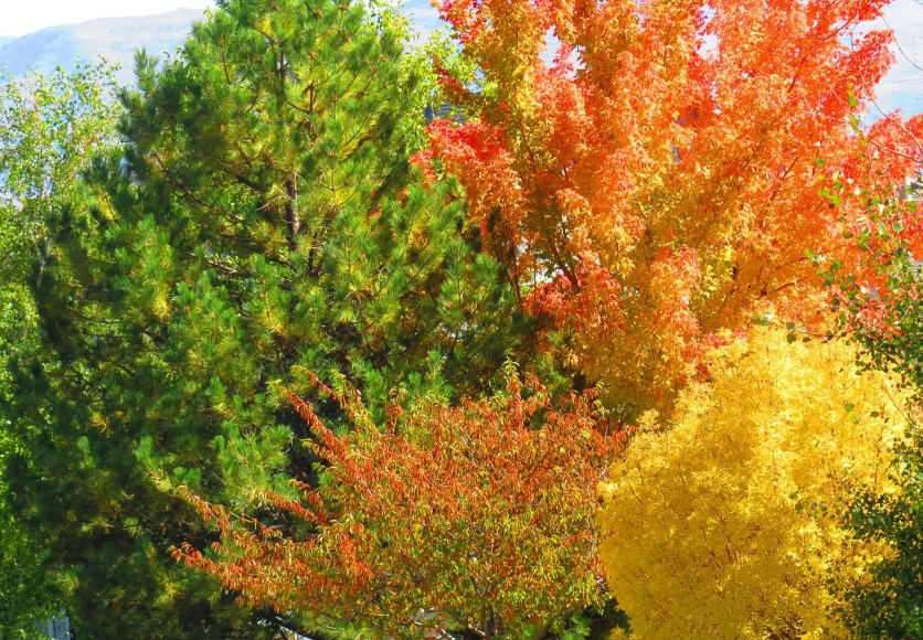 Colorful fall trees in Northwest Reno