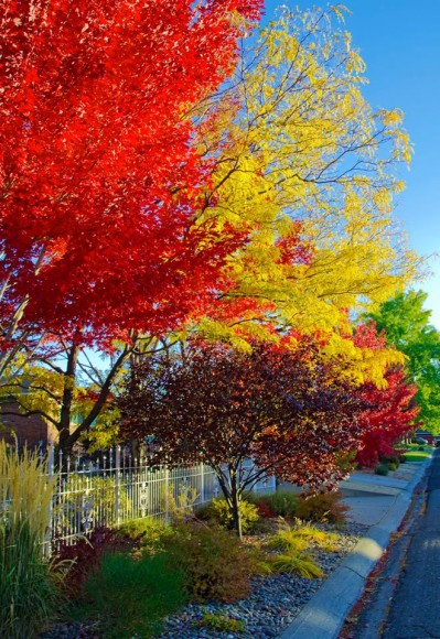 Neighborhood with colorful fall trees