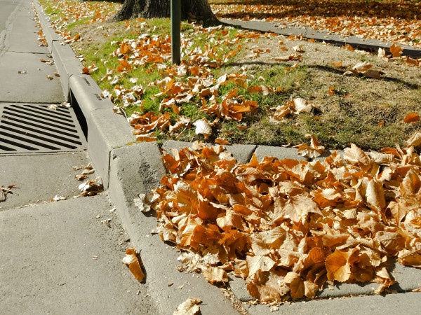 Leaves near storm drain