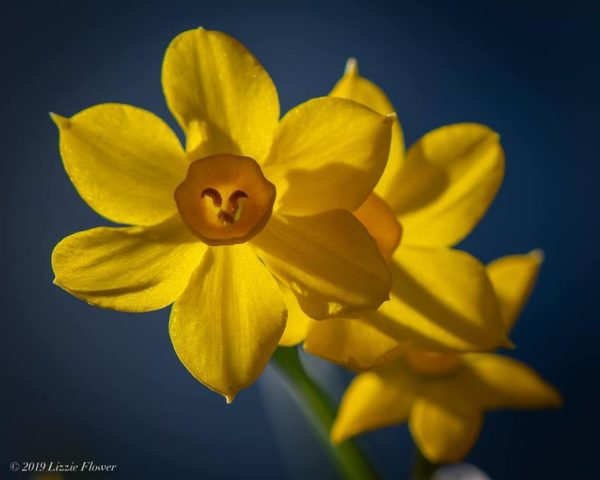 A yellow flower blooming along the Truckee River