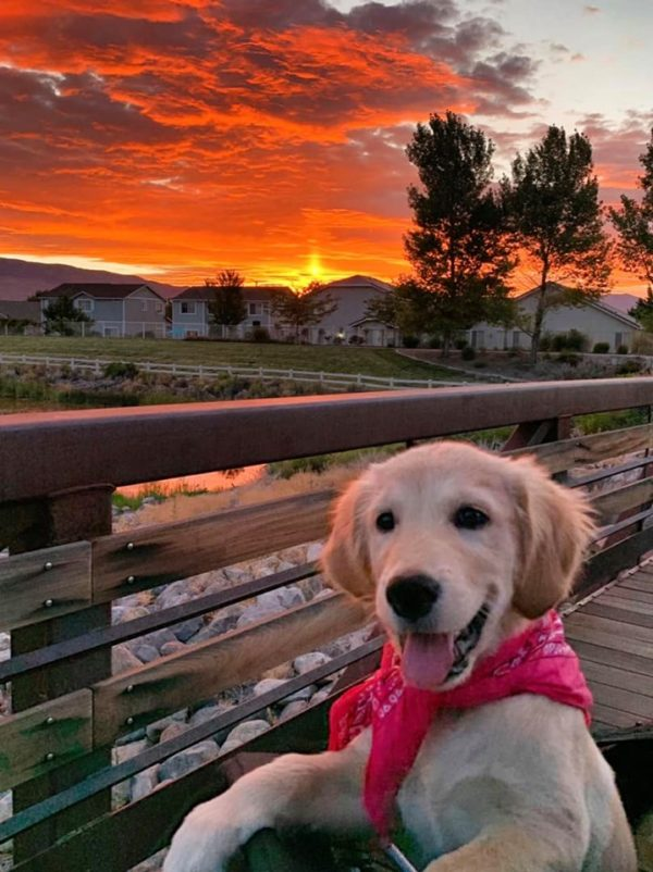 A puppy in front of a sunset in South Reno